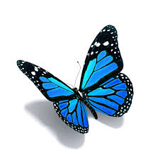 BUTTERFLIES ARE FREE TO FLY  By Stephen Dav is